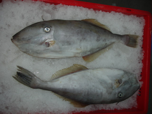 wholesale fish